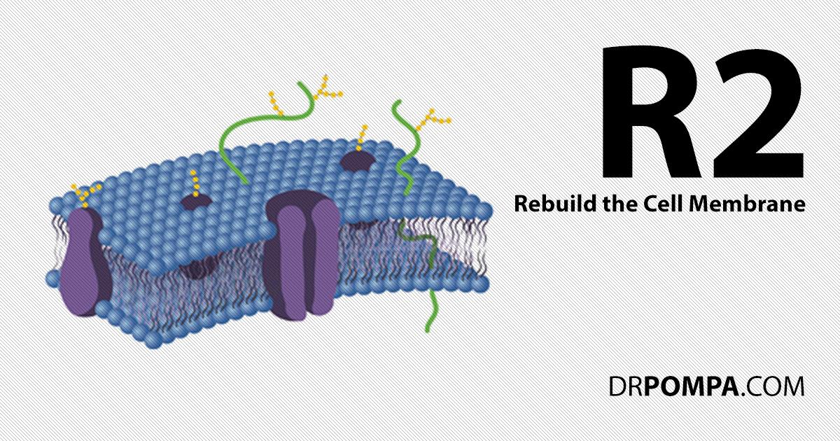 R2: Rebuild the Cell Memmbrane
