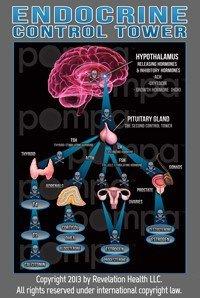 Endocrine Article