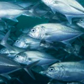 Fish-Mercury