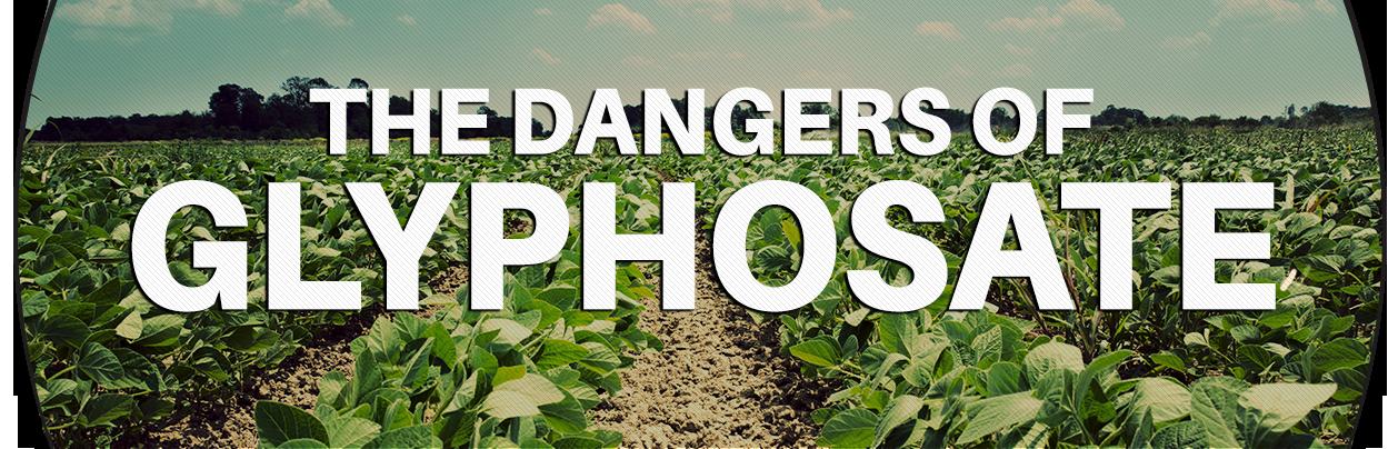 The dangers of glyphosate